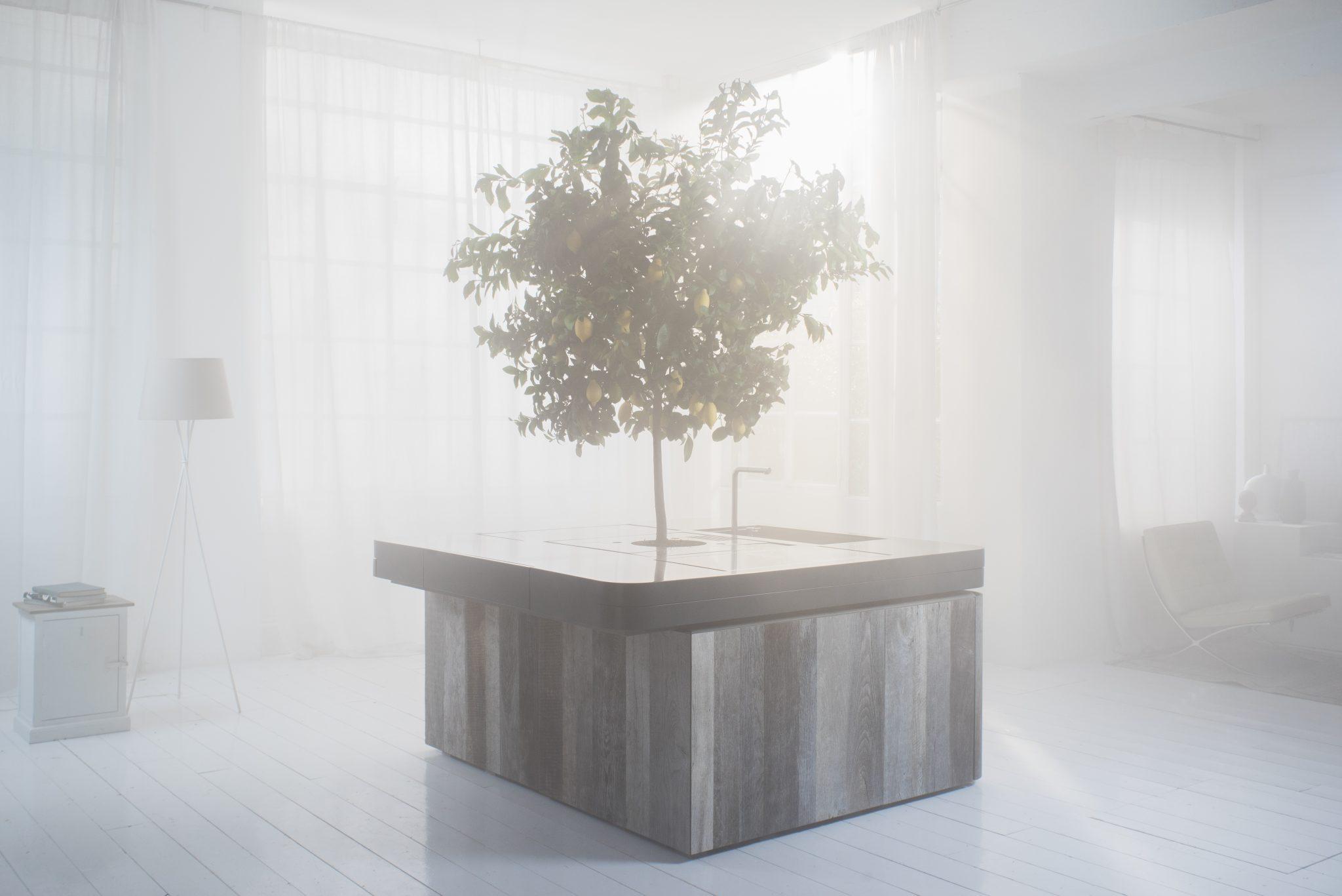 Oasi una cucina sotto i rami di un albero stefano boeri architetti